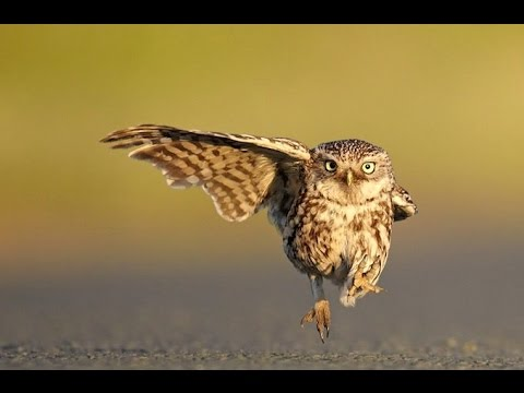 Two Owls Playing Ball | Funny Animals 2016