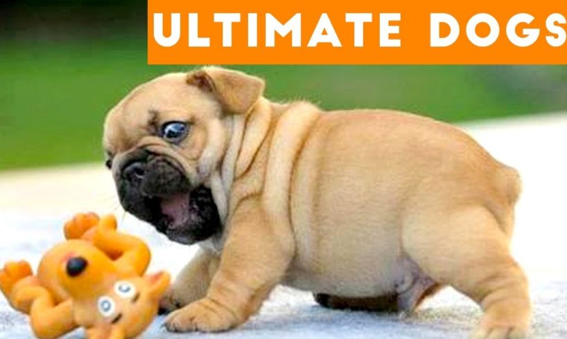 Ultimate FUNNY DOGS & CUTE PUPPIES of 2018   Try Not to Laugh Animals & Pets Compilation April