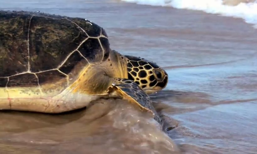 Voices of SeaWorld®: Animal Rescue | SeaWorld®