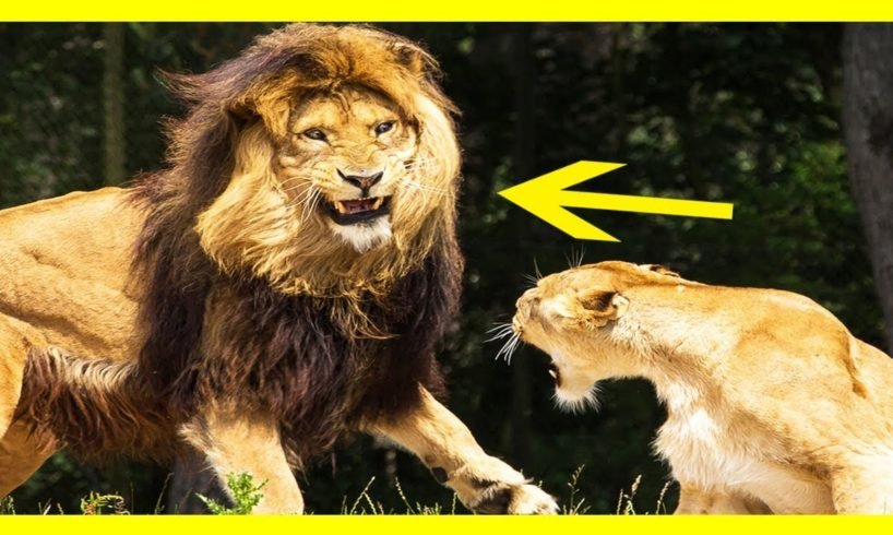 Wild Animal Fights To The Death-Extreme Animal Fights Caught on Tape