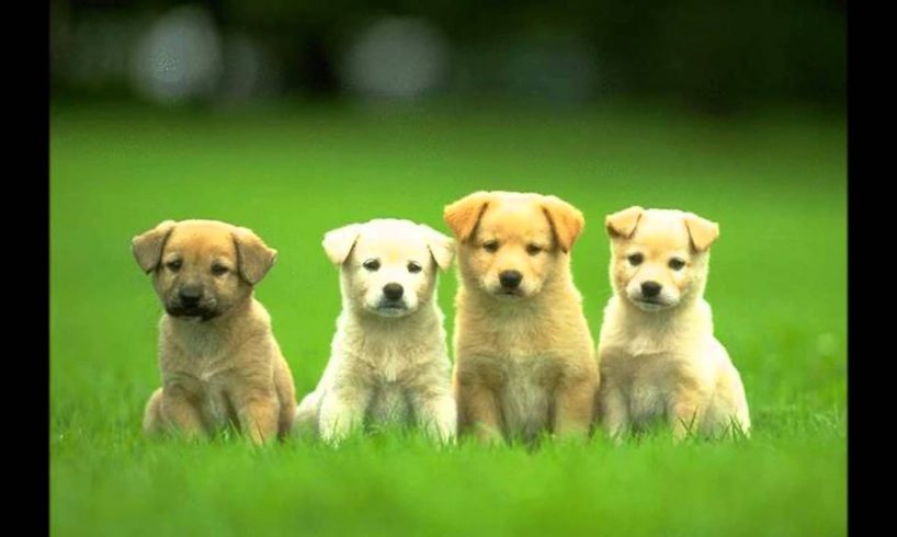 Cute dogs!! - Cute puppies and dogs video ( Dog video in Dog pictures)