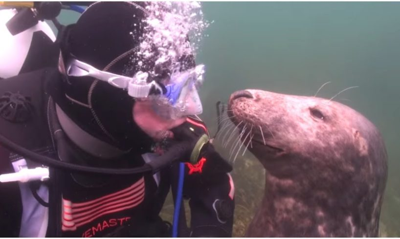 A Diver Had No Clue What This Seal Was Up To – And Then It Suddenly Gripped Him By The Hand