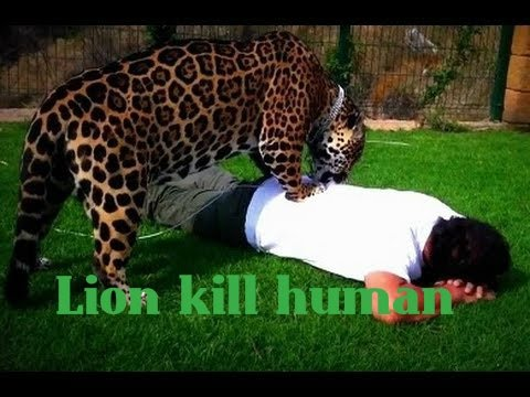 Animal Fights: Lion Attack Human - Amazing Lion Attack Human On TV