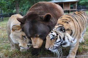 Animals ADOPTING Other Animal Species!