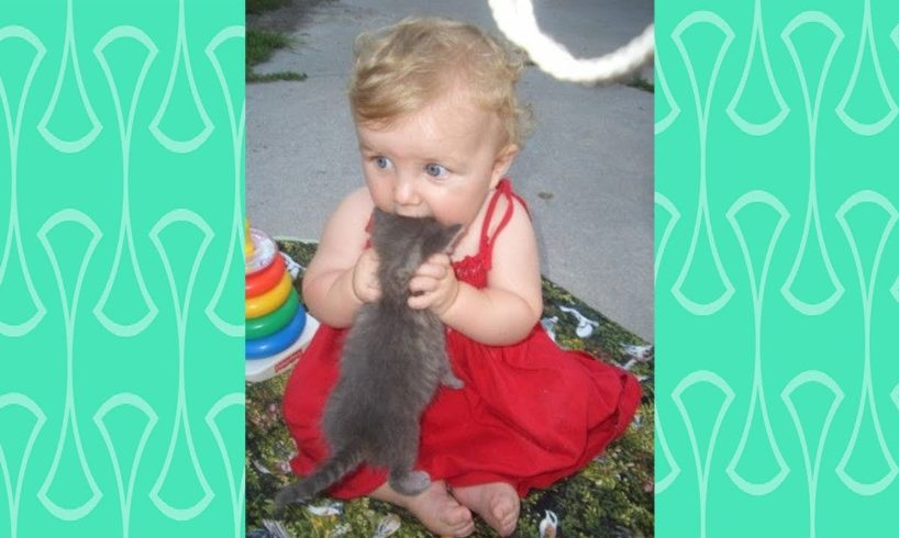 Annoying Baby and Cats -  Babies have happy time to playing with Cat