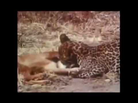 Biggest Super  Cool wild animal fights !! Part A