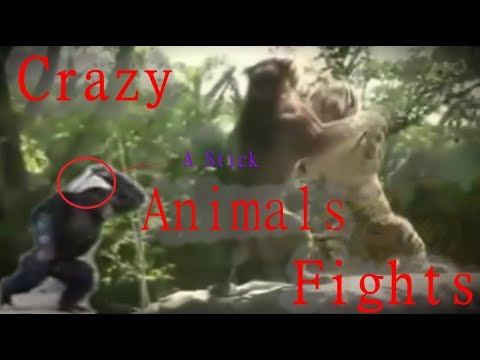 CRAZY ANIMAL FIGHTS COMPILATION - AGGRETION OUTBURST