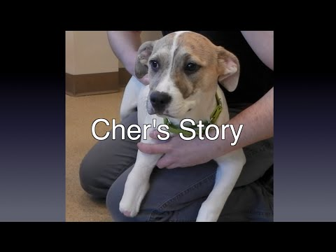 Cher's Story: A Rescued Puppy Needs A Prosthetic Foot