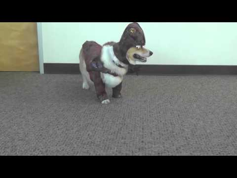 Cute Puppies In Cute Costumes Compilation
