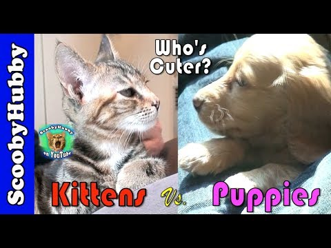 Kittens Vs. Puppies (Who's Cuter?)