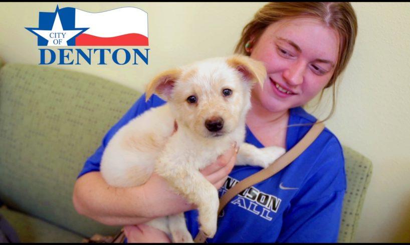 Linda McNatt Animal Care and Adoption Center - Love for the Animals