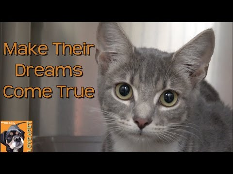 Make Their Dreams Come True:  Adopt a Pet from a Shelter Near You!