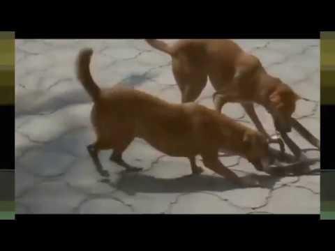 Most Amazing Wild Animal Attacks Dog vs Snake  - Craziest Animal Fights