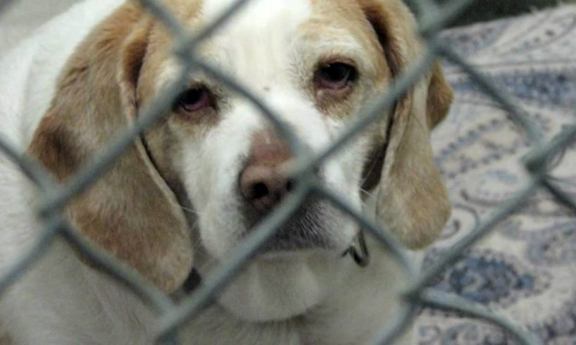 Opt to Adopt- An Animal Shelter Video