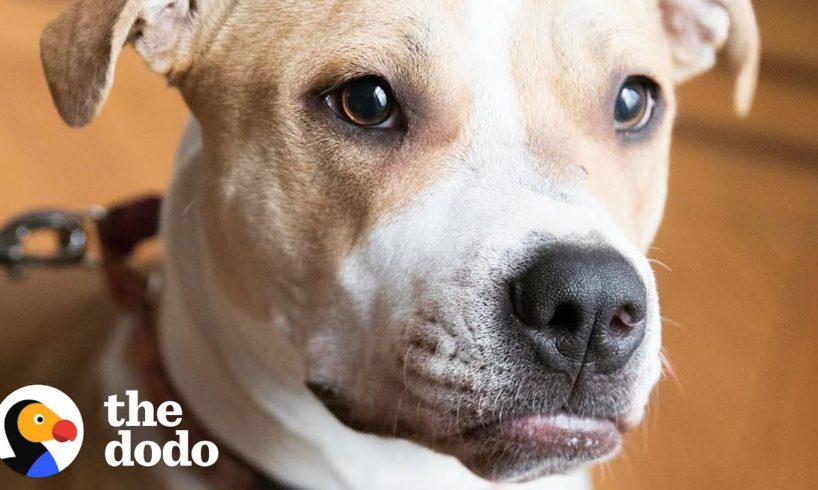 Pit Bull Puppy Keeps Waiting For A Family To Love Her | The Dodo