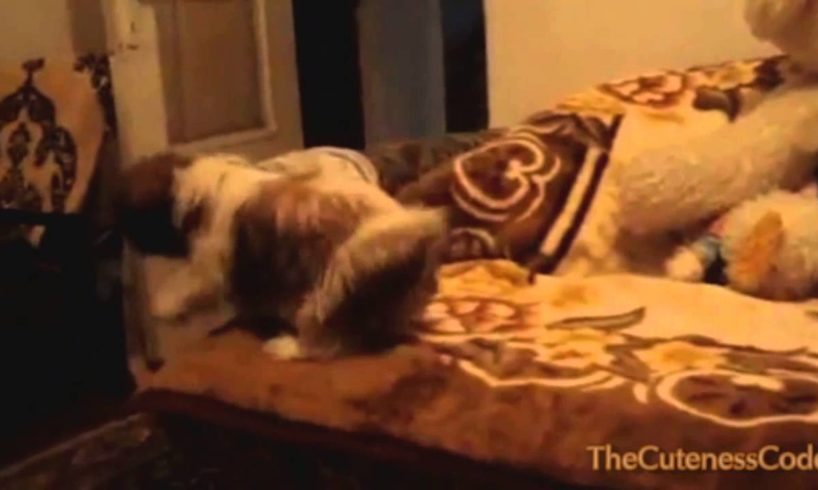Puppies Scared Of Jumping Compilation 2014 [NEW]