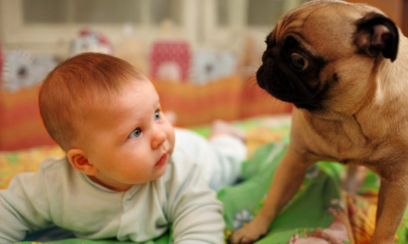 Puppies and Babies Playing Together Compilation NEW