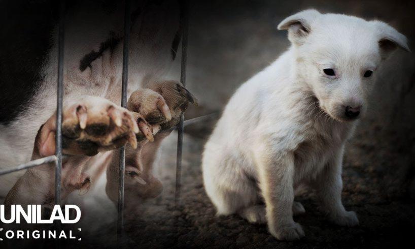The Dark Side of Britain: Puppy Farms | UNILAD Original Documentary