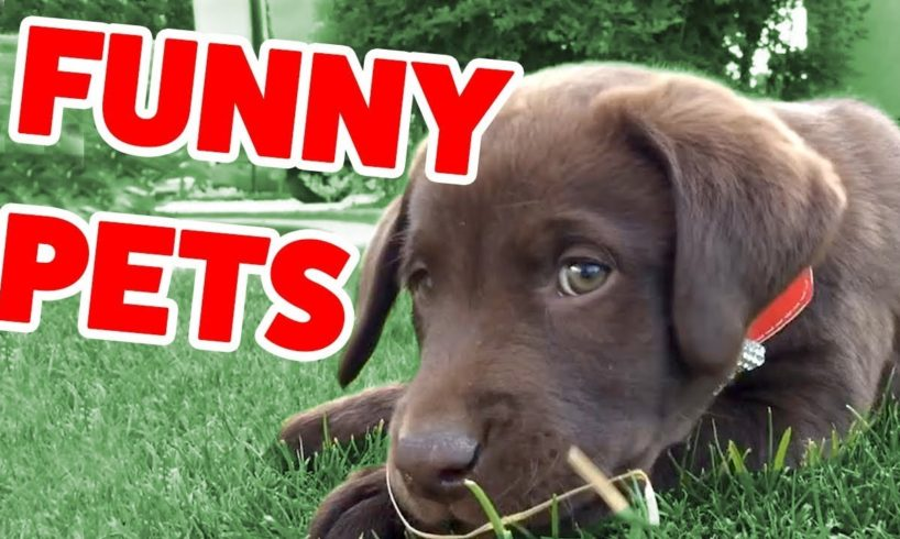 The Funniest Cute Pets & Animals Home Video Bloopers of 2019 Weekly Compilation | Funny Pet Videos