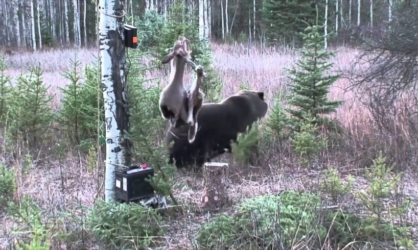 The Wild Revue, Ep. 3: Top 10 Wild Animal Fights Caught on Camera