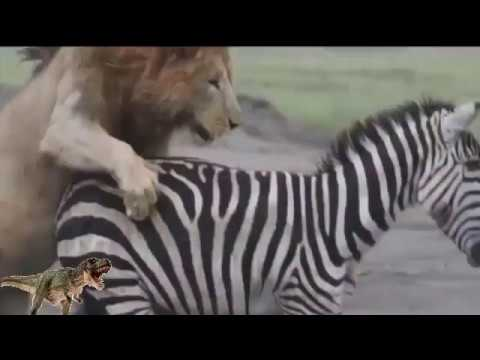 Top 20 Animal Fights Compilation