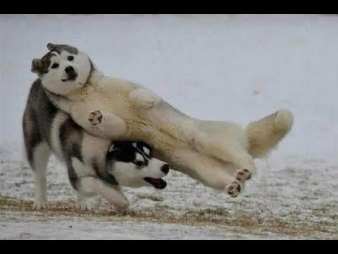 Try Not To Laugh - Funny Animals That Will Brighten Your Day   Funny And Cute Animals