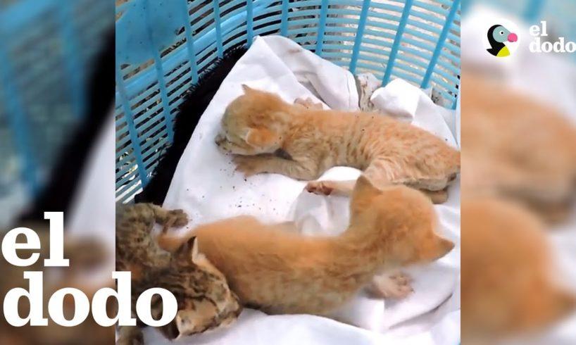 ¡Gatitos rescatados de un tubo de ventilación! | El Dodo