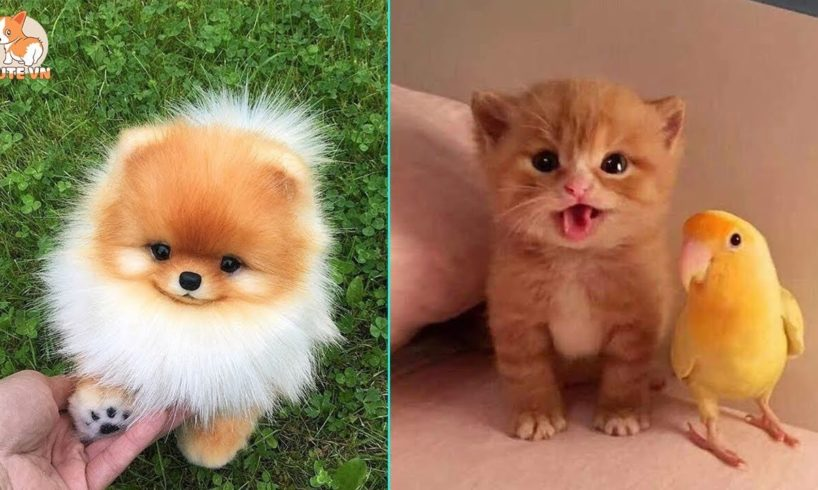 ♥TikTok Pets: Funny and Cute Pets Compilation #6♥ - CuteVN
