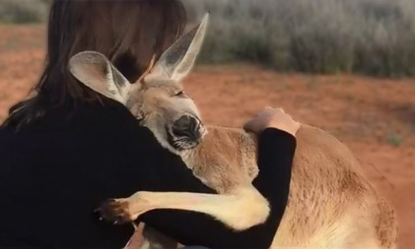 10 Animals That Showed Gratefulness To The Humans Who Saved Them