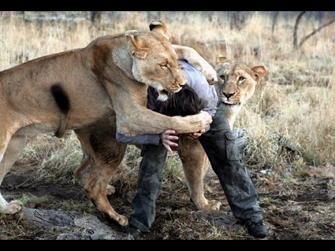 10 CRAZIEST Animal Fights Caught On Camera!