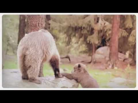 Adorable Baby Animals & Their Moms [Compilation] - Happy Mother's Day!