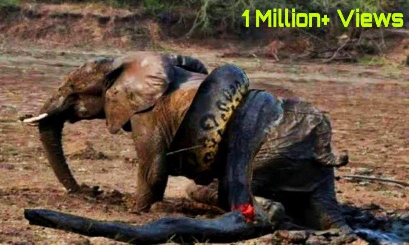 Amazing Wild Animals Attacks   Craziest Animal Fights Caught On Camera  Wild Animal Attacks  