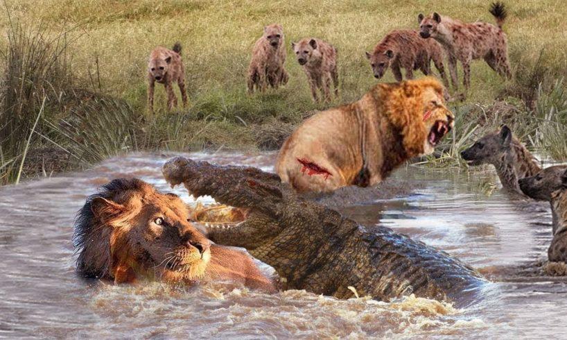 Amazing Wild Animals Attacks - Wild Animal Fights  Camera | Wild Animals  Fights , #JMSCFOREST