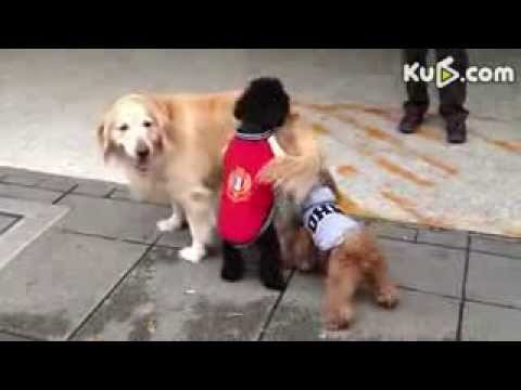[Animal Sex]Animals Mating With Humans Funny
