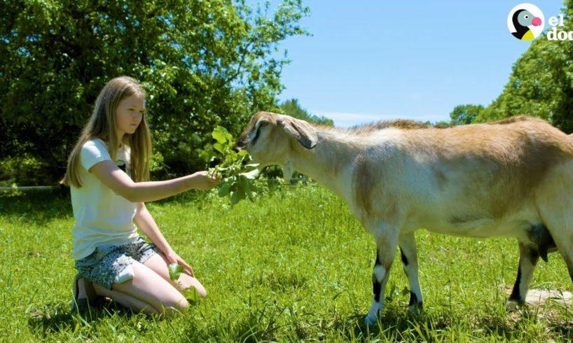 Ava y Flora la cabra   Amigos Aventureros