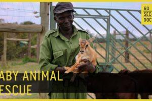 Baby Animal Rescue // 60 Second Docs