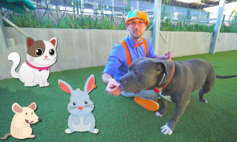 Blippi Visits an Animal Shelter   Learn Animals for Children and The Pet Song