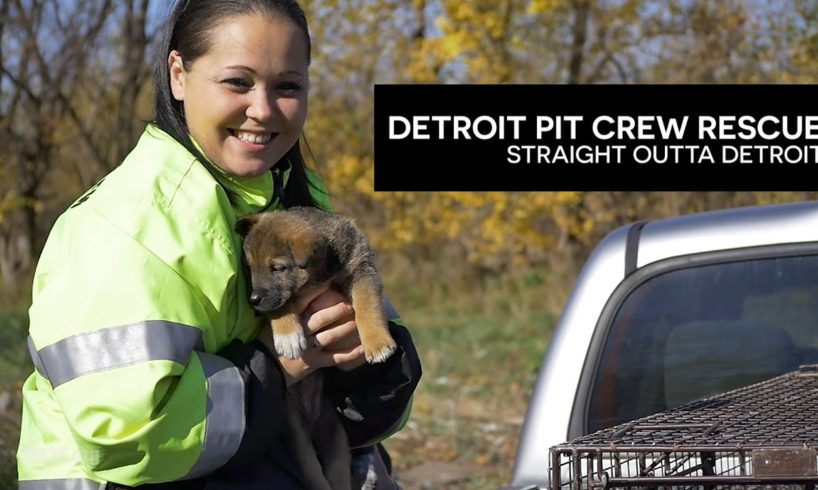 Caught On Camera! Abandoned Puppies Rescued from Under House in Detroit - Hope For Dogs Like My DoDo