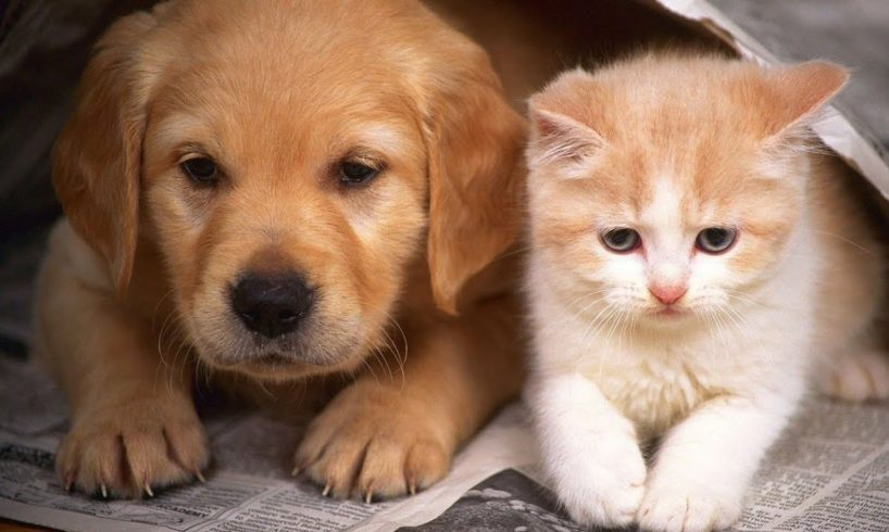 Cute And Funny Puppies And Kittens - Cute Puppies Doing Funny Things   Funny Dogs And Cats