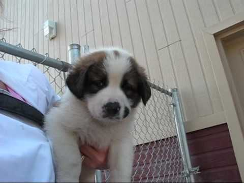Cute Puppies For Adoption Chiots pour Adoption