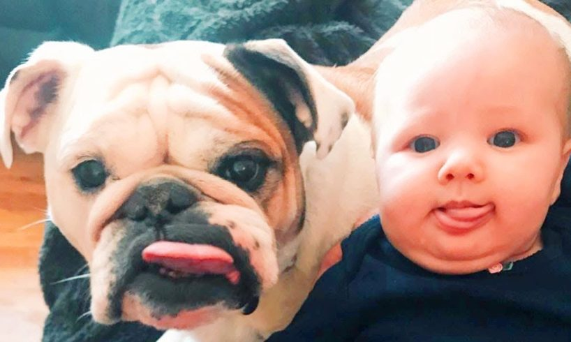 Cute Puppies Playing With Baby - Sweet Love Moments