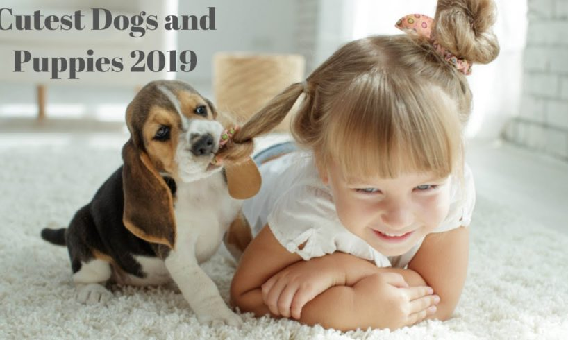 Cutest Dogs and Puppies 2019 HD