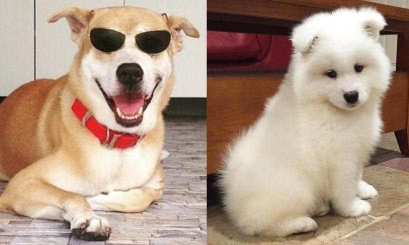 Cutest Puppies And Dogs In The World - Cute Dogs Doing Funny Things 2019 - Puppies TV