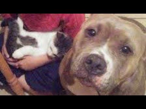 Dog Rescue | Dog Transformation | Dog care | Dog lover | Dog videos | Animal Aid