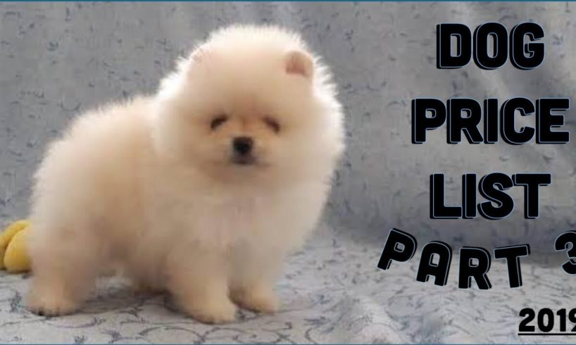 Dog price List in India [2019] | Puppy price list | Pomeranian Puppy Price In India