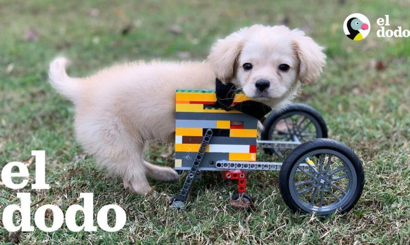 Este cachorrito tiene silla de ruedas hecha de LEGOs | El Dodo