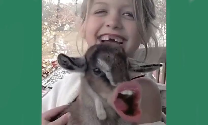 Funny Cute Animals - Cutest moments of Puppies, Kittens and Pets #1