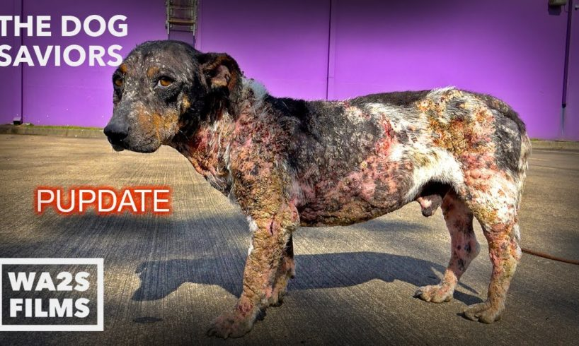 Hope Rescues Dog Turning to Stone Too Hurt To Move - The Dog Saviors