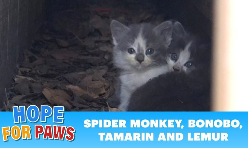 Kittens under a bungalow waited for their mom, but she never came back.