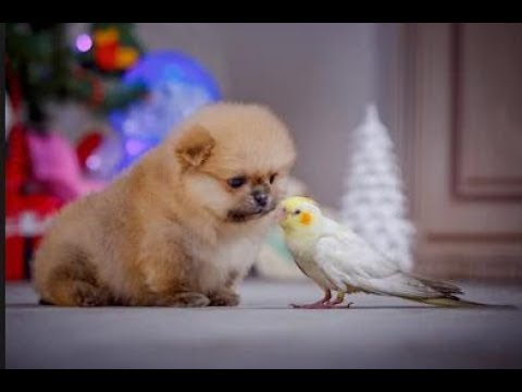 Parrots Trying To Befriend Puppies